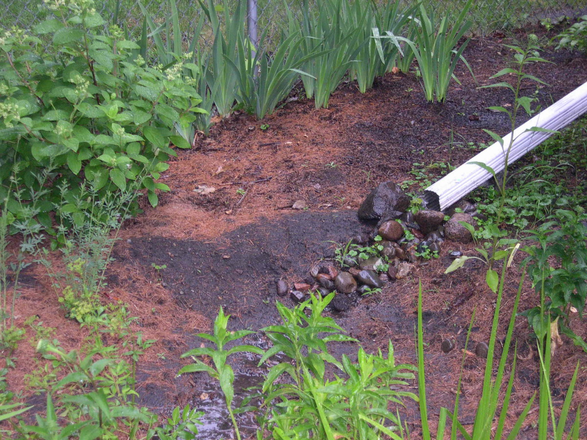 Rain gardens allow dirty rain water to be filtered through plants and soil.