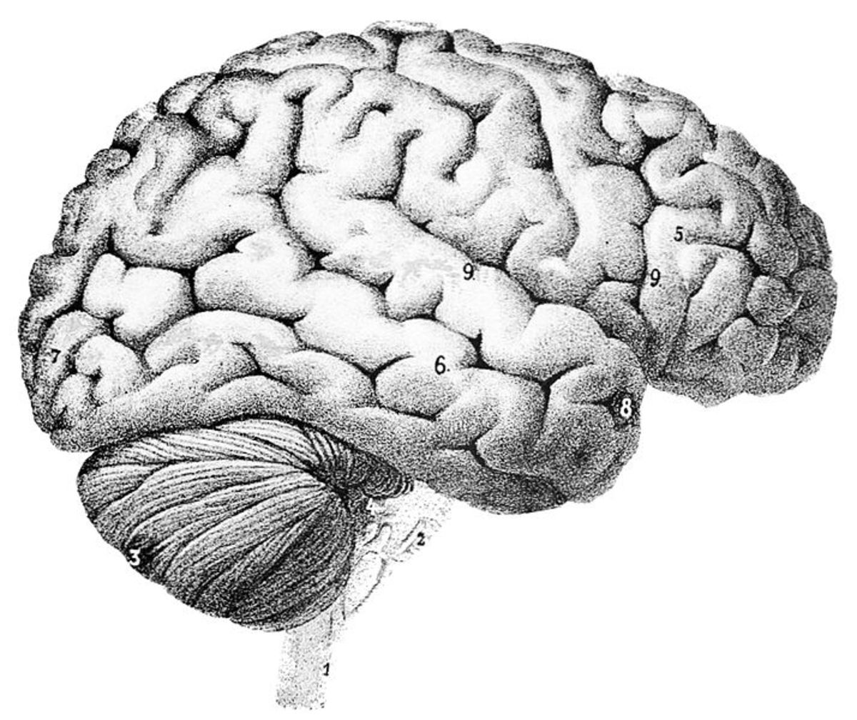 Grow your brain with these 9 tips