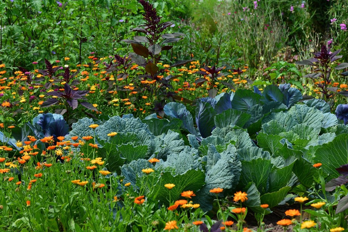 Add flowers and herbs to attract pollinators