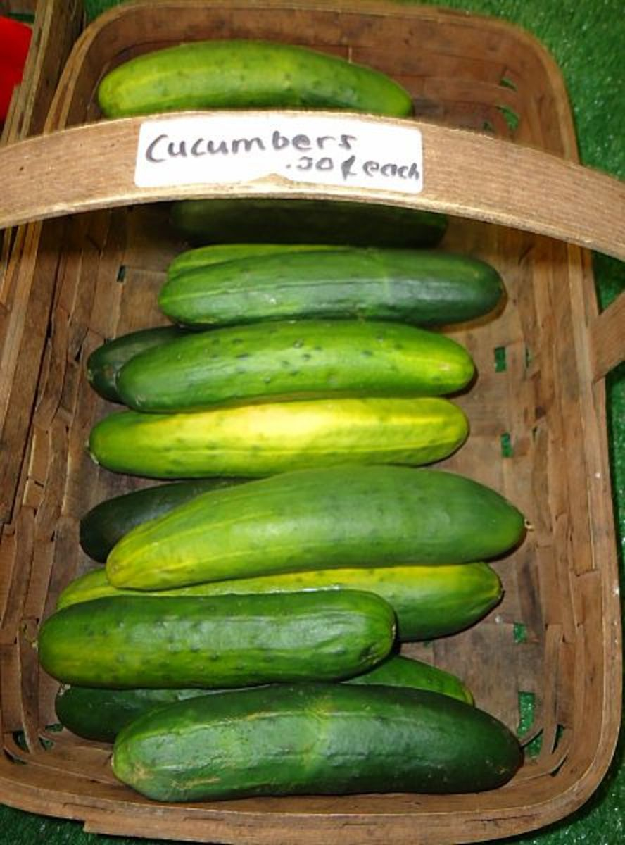 A Guide to Growing Cucumbers