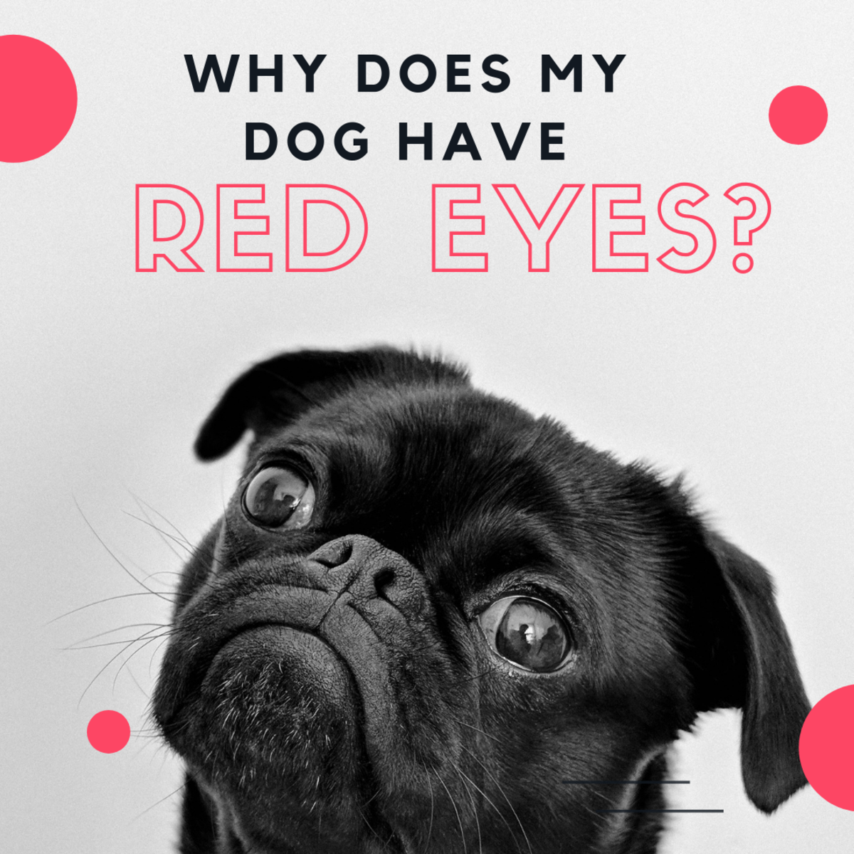 Why Are My Dog's Eyes Red and Inflamed?