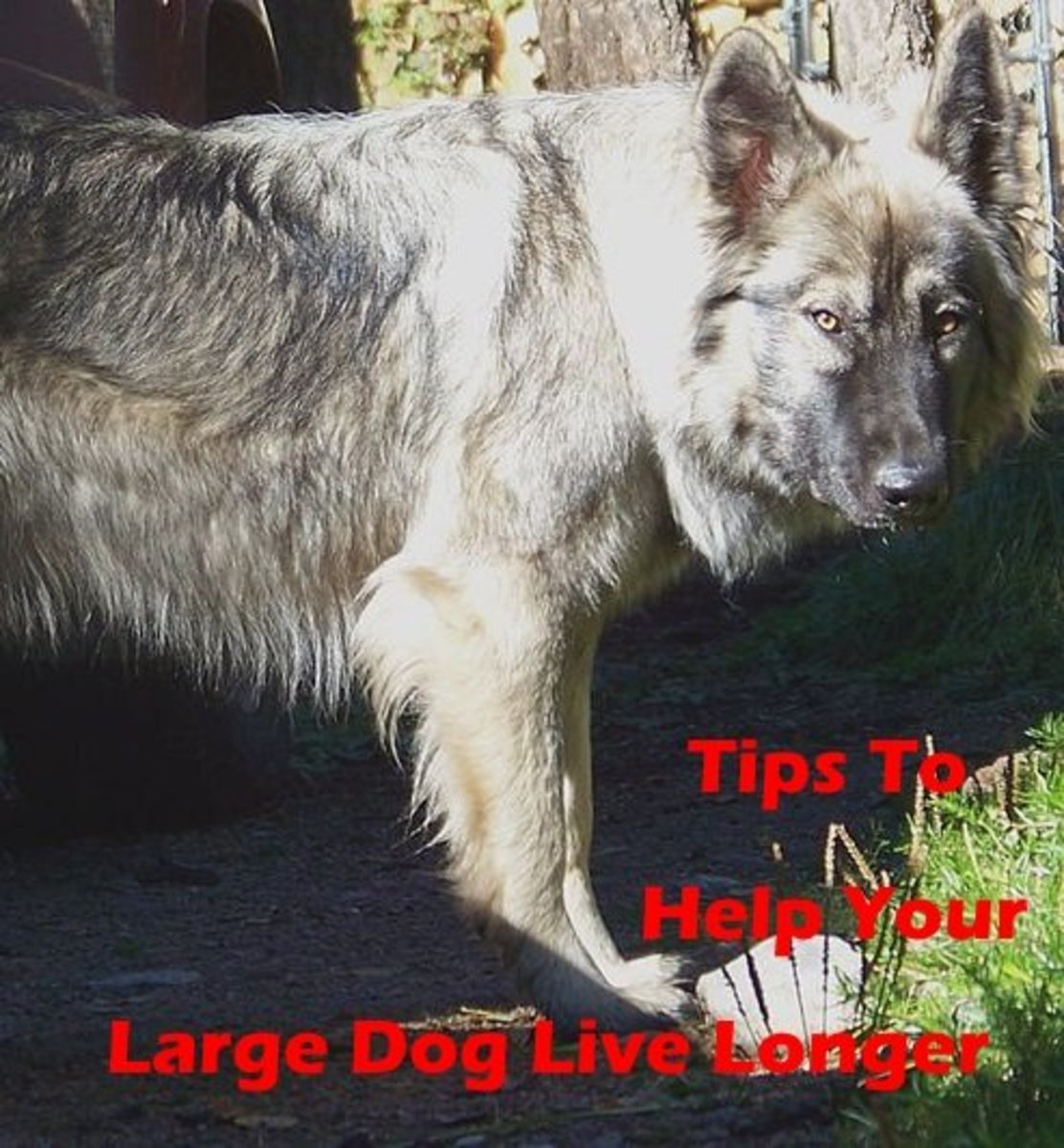 Large dog breeds that live longer.