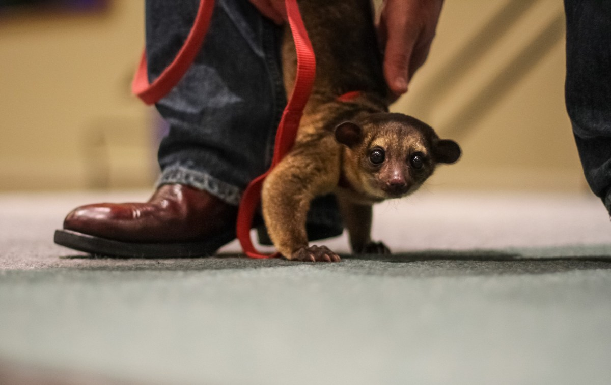 5 Irrefutable Arguments That Support Exotic Pet Ownership