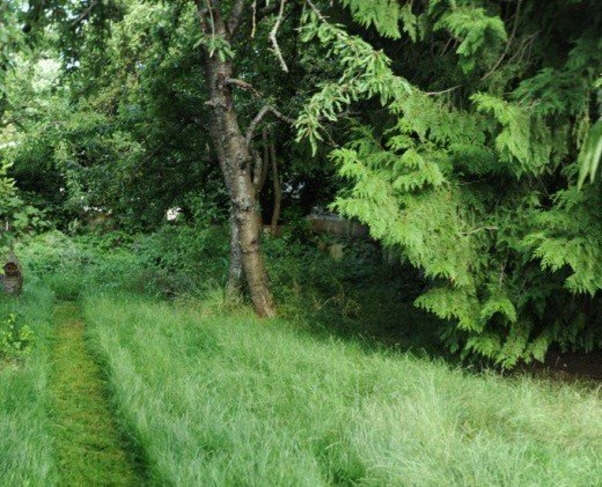 Imagine tackling a lawn like this without an electric grass trimmer. Yikes!