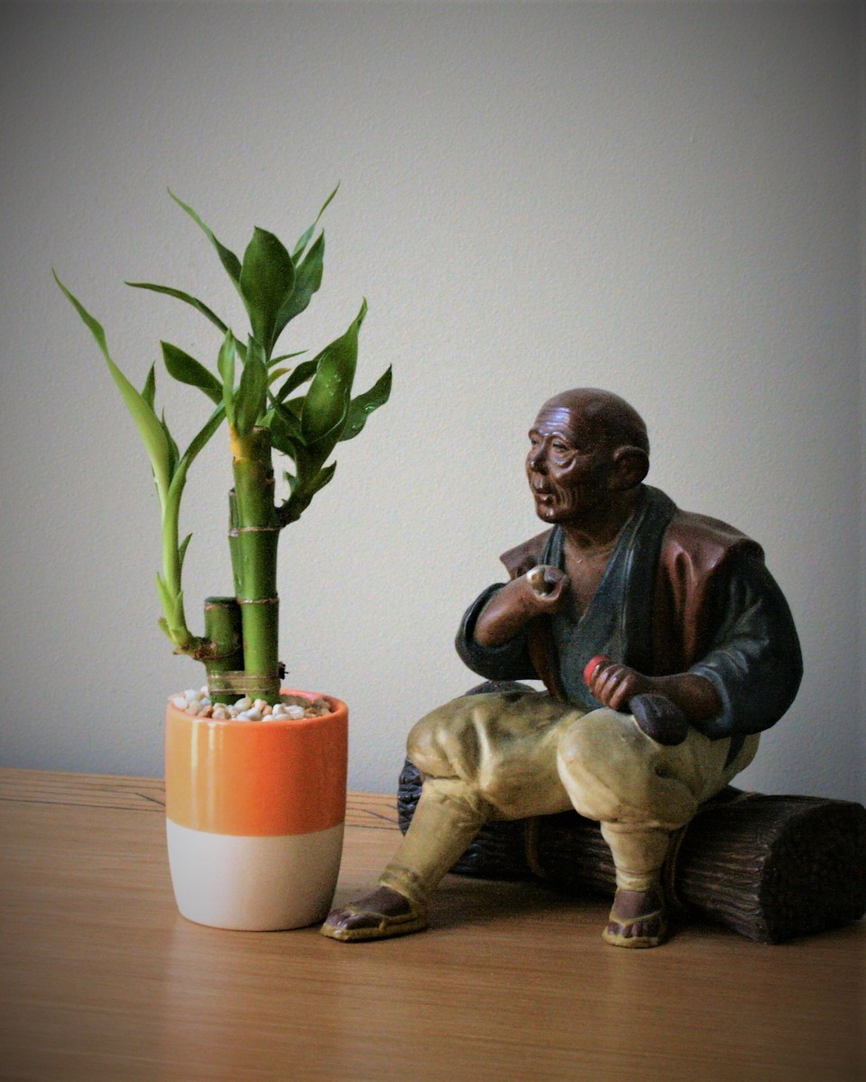 Lucky bamboo is considered to be auspicious within the Chinese system of feng shui.