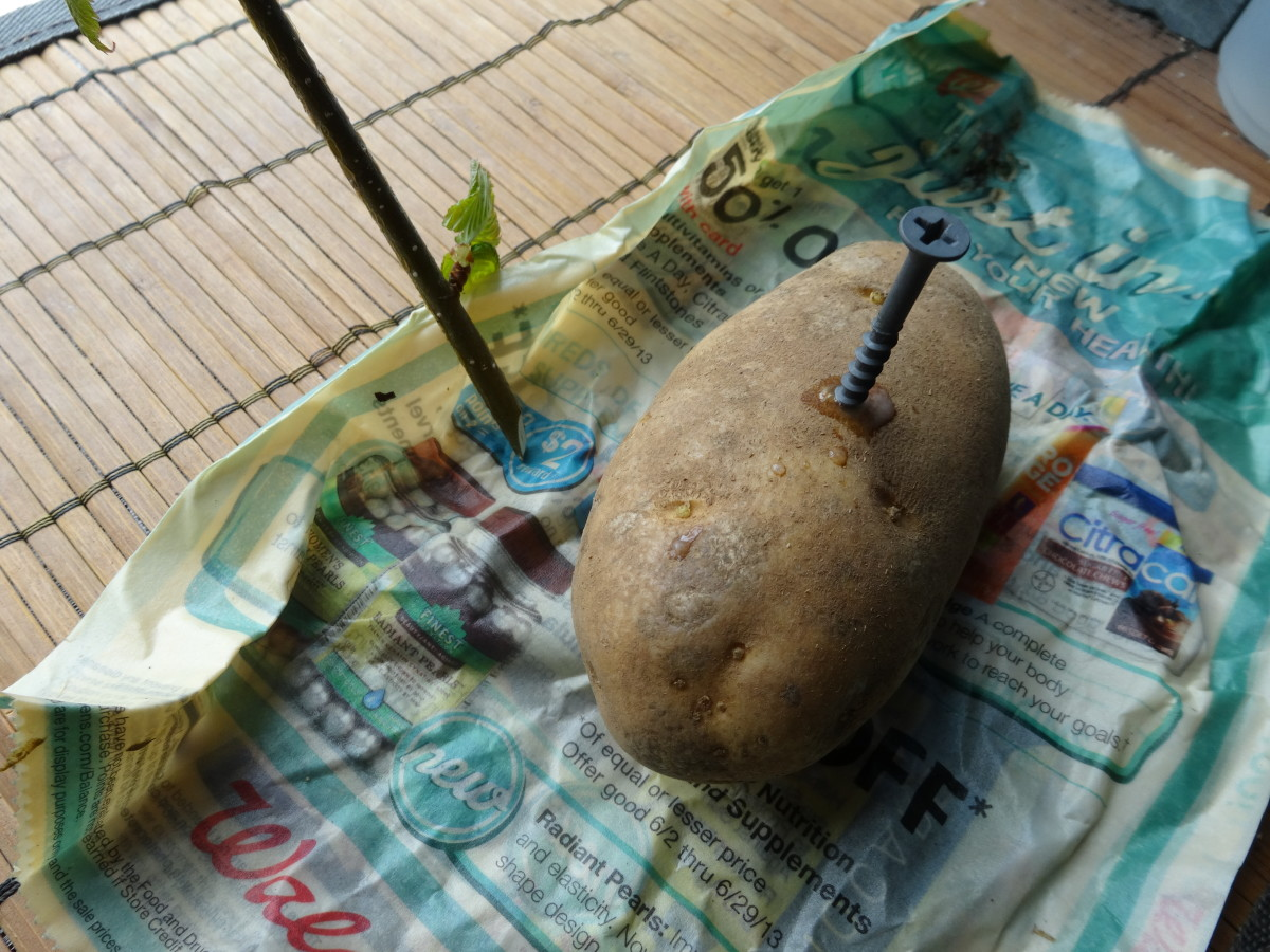 Poke a hole in the potato with a screw or drill.