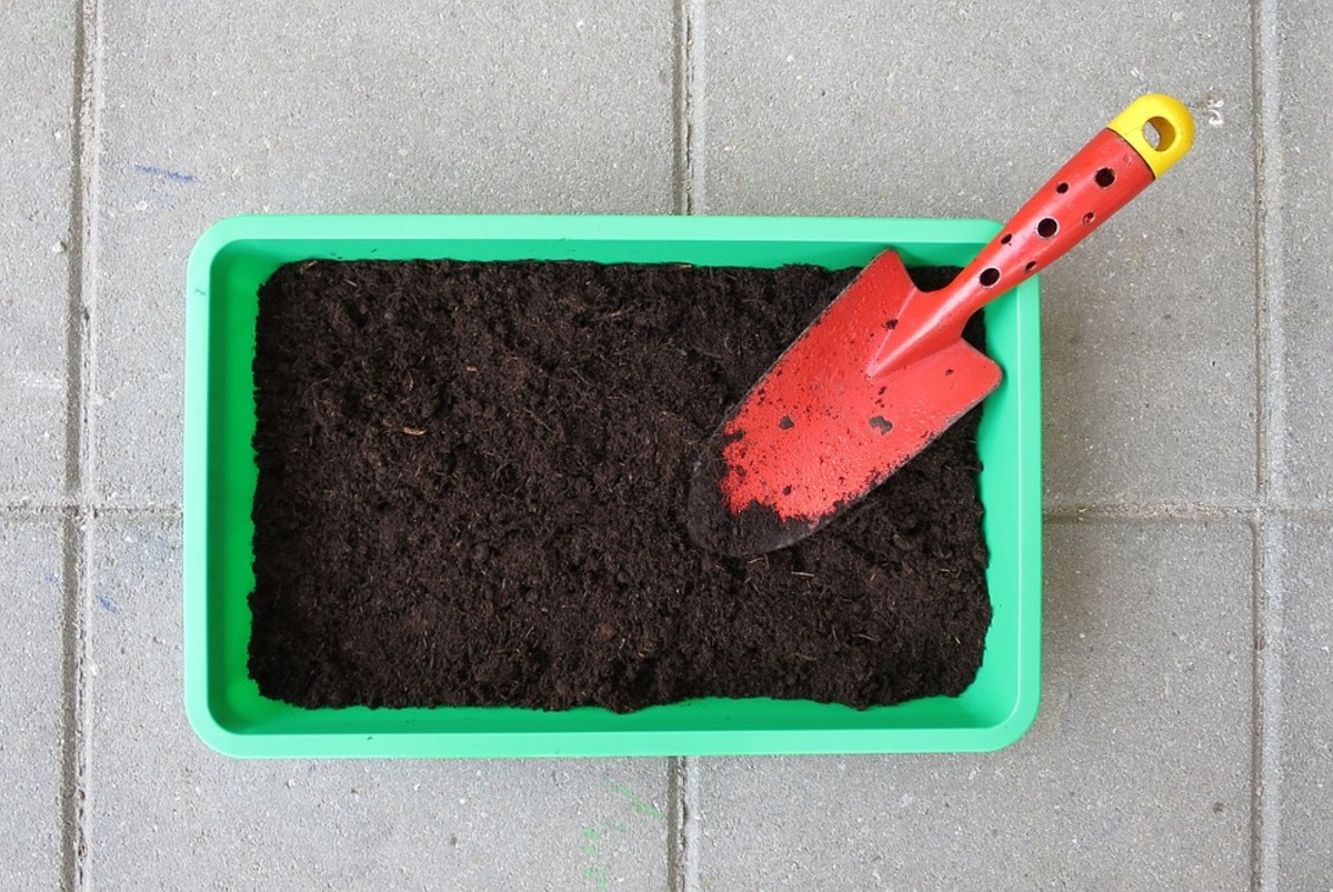 Using the correct tools will ensure the accuracy of your soil test.