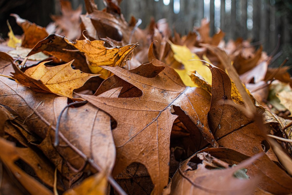 Fall is the best time to have your soil tested and to add the recommended amendments to your lawn or garden.