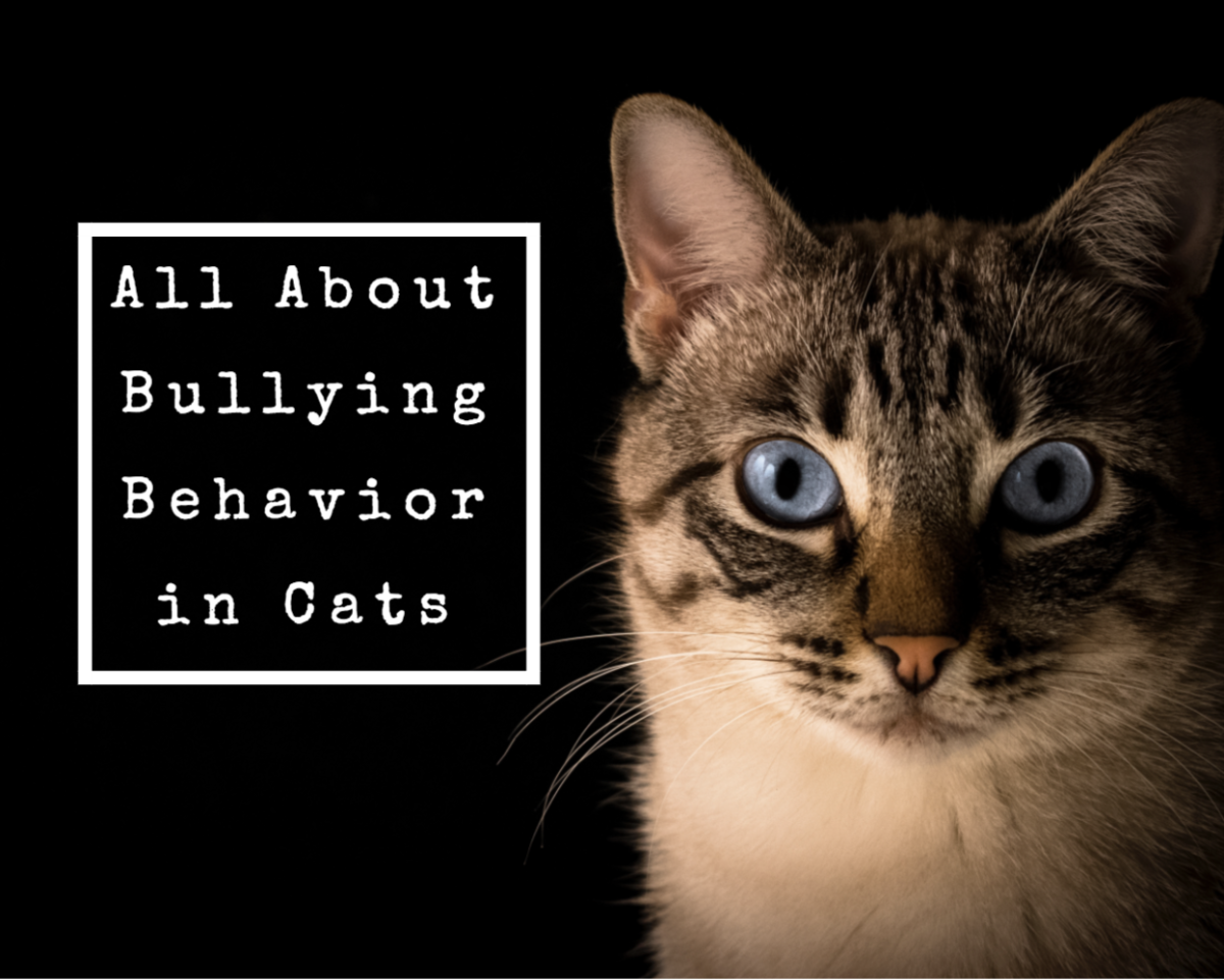 The Best Ways to Stop a Cat From Being a Bully