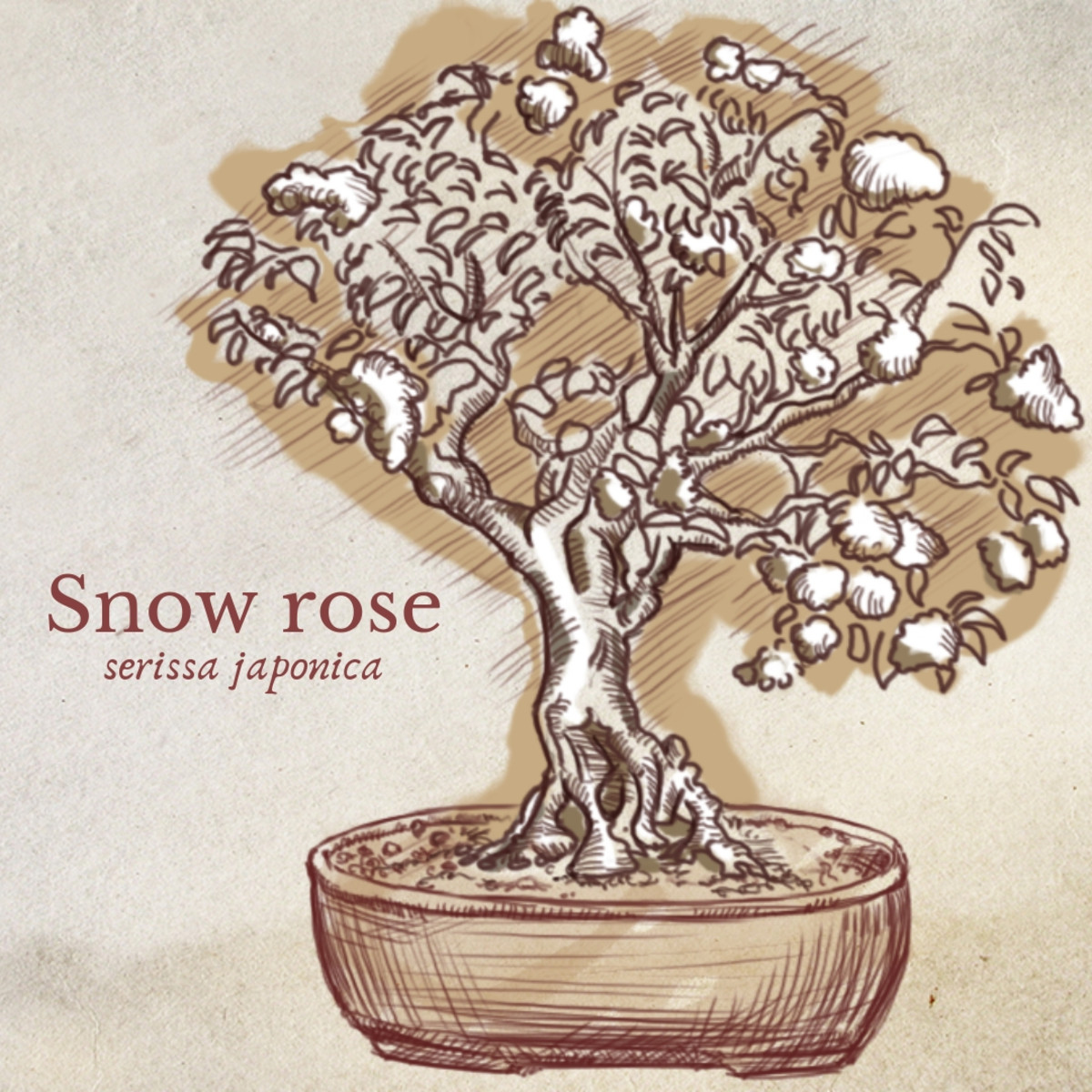 Illustration of Snow Rose