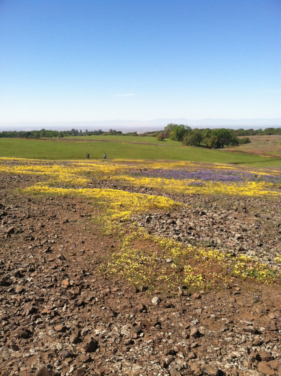 The flat table-top surface of this mesa is striped in early spring with wildflower fields growing in drying vernal pools.
