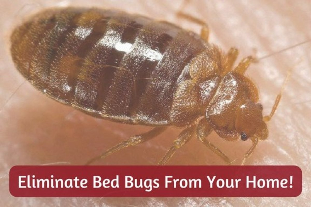 12 Easy DIY Ways to Get Rid of Bed Bugs Quickly: A Killer Guide