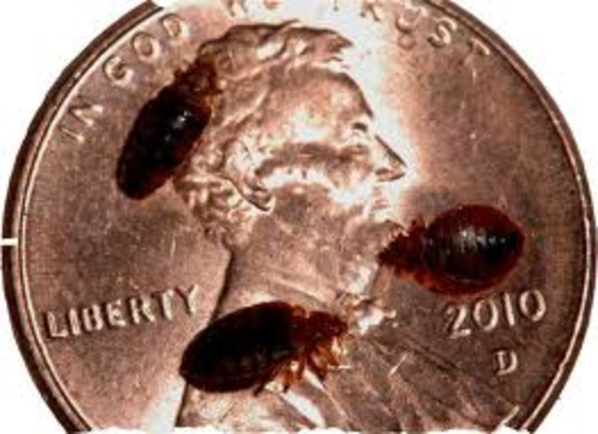 12 Easy Diy Ways To Get Rid Of Bed Bugs Quickly A Killer Guide