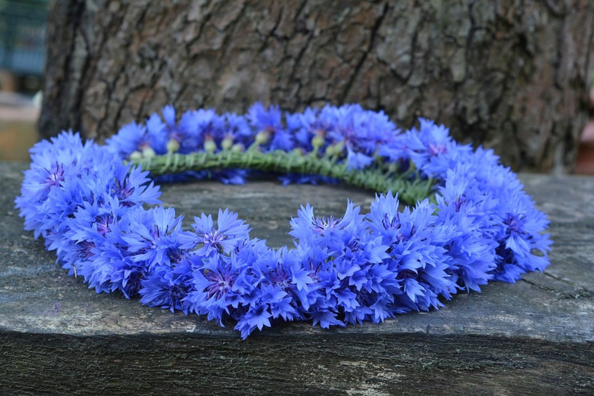 A wreath of cornflowers similar to this was found in King Tut's tomb.