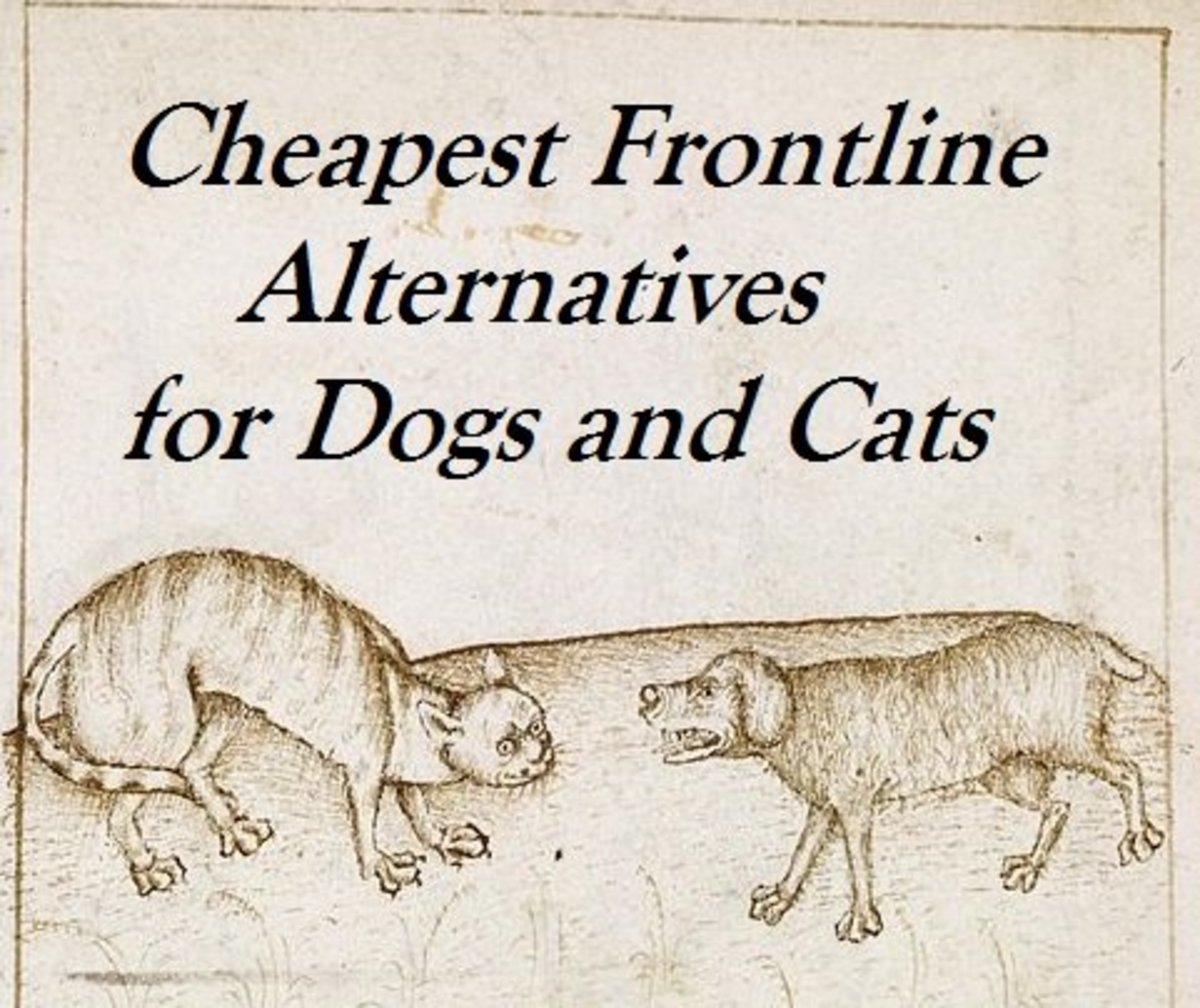 Cheapest Alternatives to Frontline Flea Medication for Pets