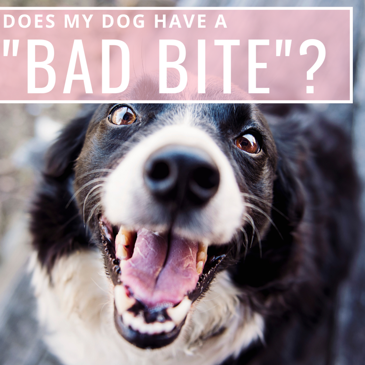 Poor oral confirmation in canines is more than just a question of looks—it can affect their health.