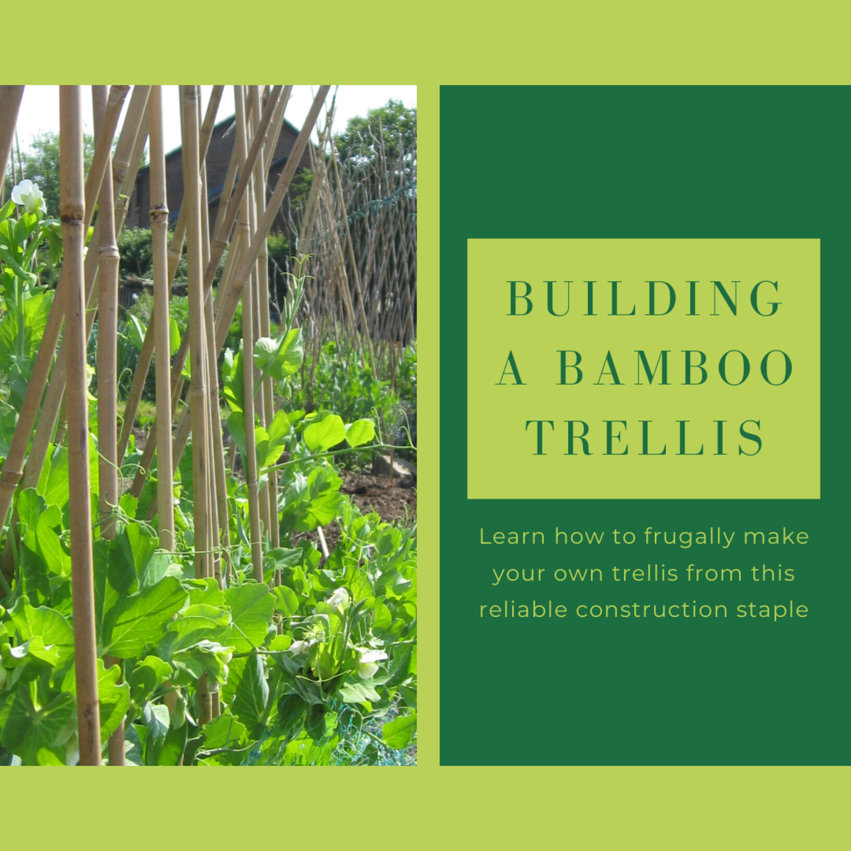This article will show you how to build your own bamboo trellis at virtually zero cost.