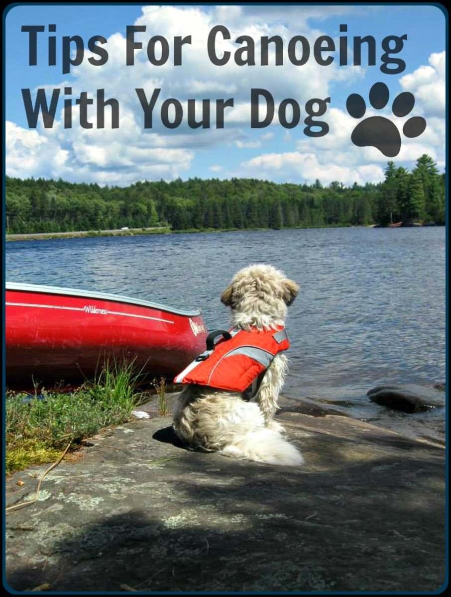 An anxious, hyper dog is not one you want in a canoe with you. Training your dog to become comfortable in a canoe takes patience and persistence.