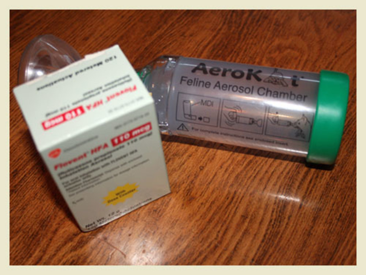 Cats with Asthma: The AeroKat Feline Aerosol Chamber