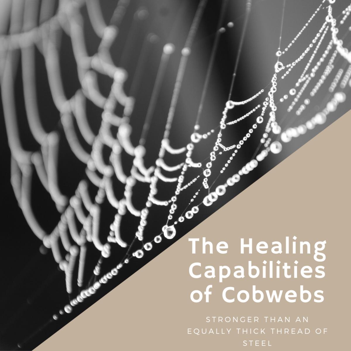 Survival Healing: Using Spider Webs on Wounds