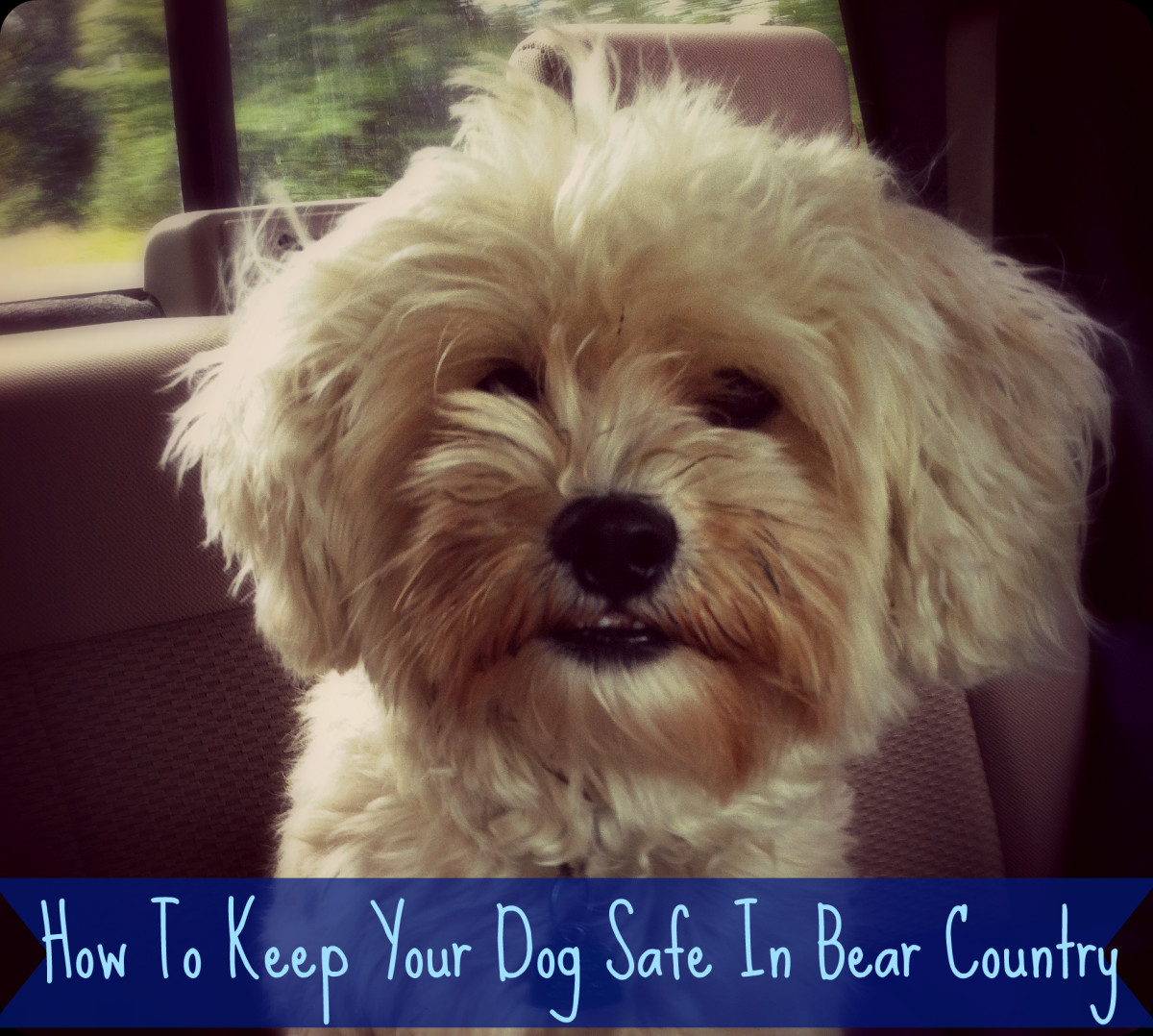How To Keep Your Dog Safe While Camping In Bear Country