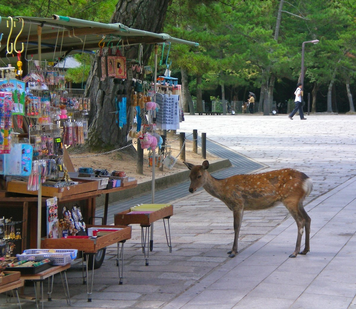 Deer waiting for a feed, Nara Park (c) A Harrison