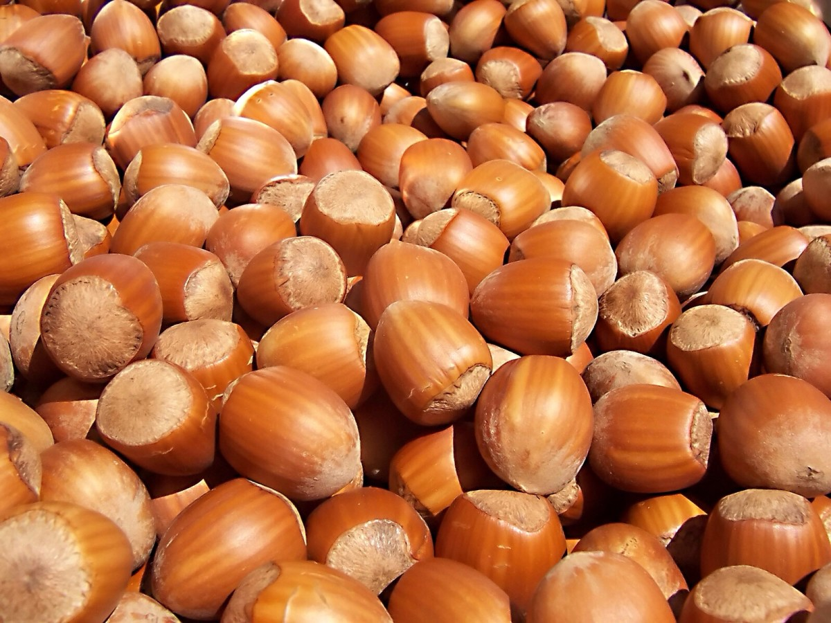 Hazelnuts are delicious and nutritious, but they can cause oral allergy syndrome.