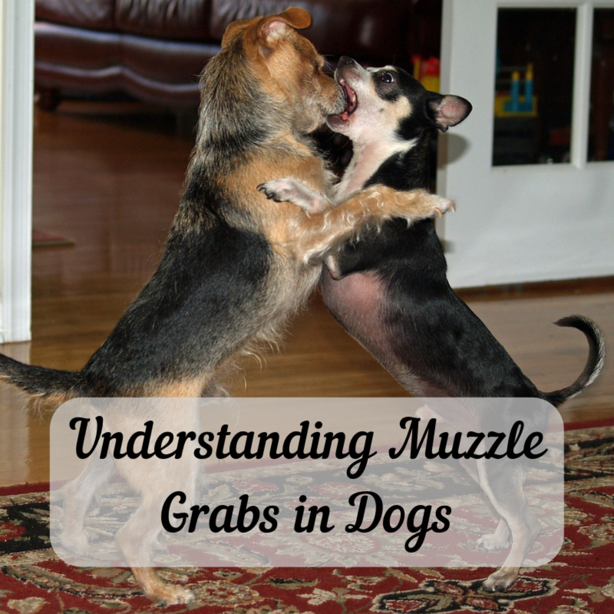 Understanding Muzzle Grabs: Should You Grab Your Dog's Snout?