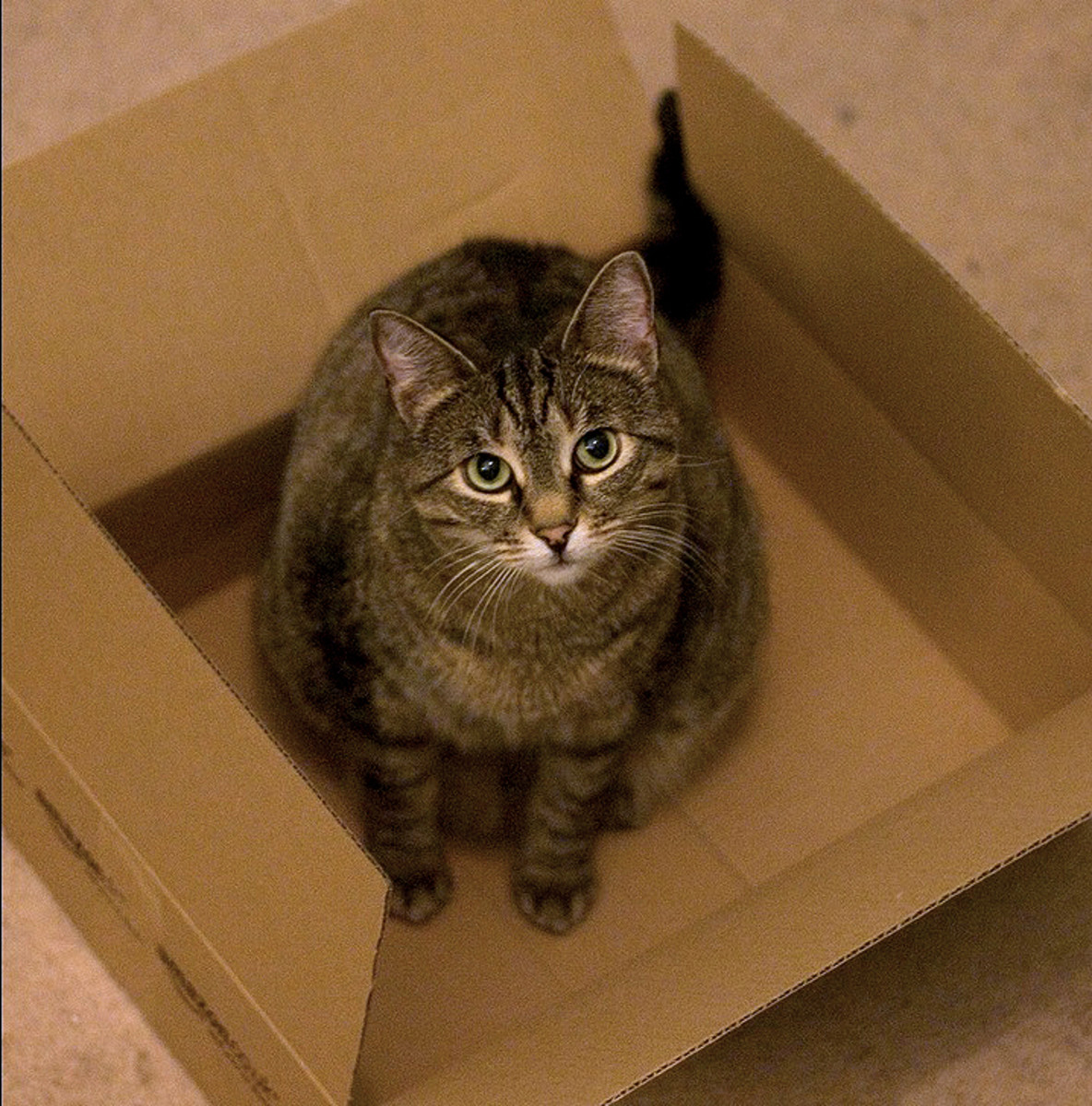 Box cat is getting ready to be shipped out.
