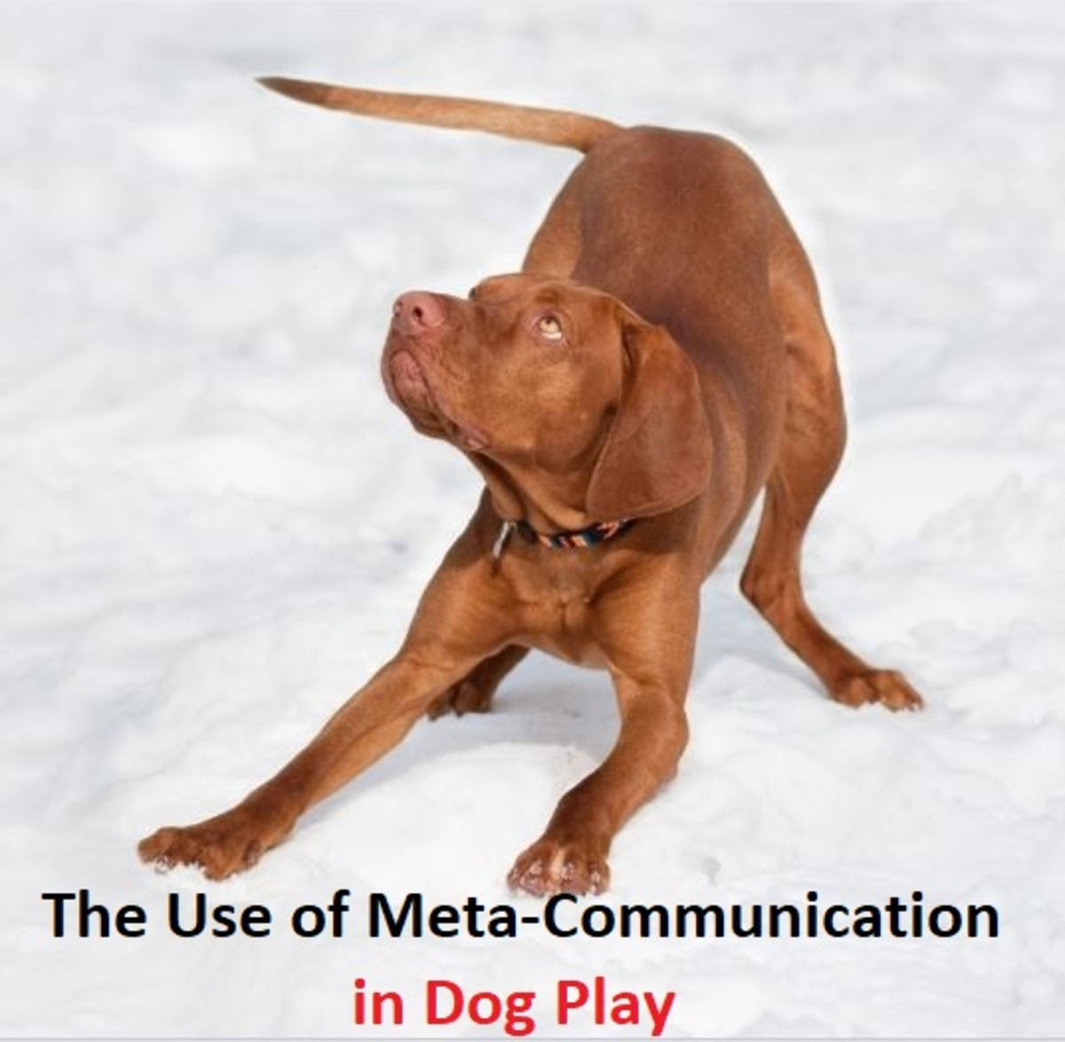 The Use of Meta-Communication in Dog Play