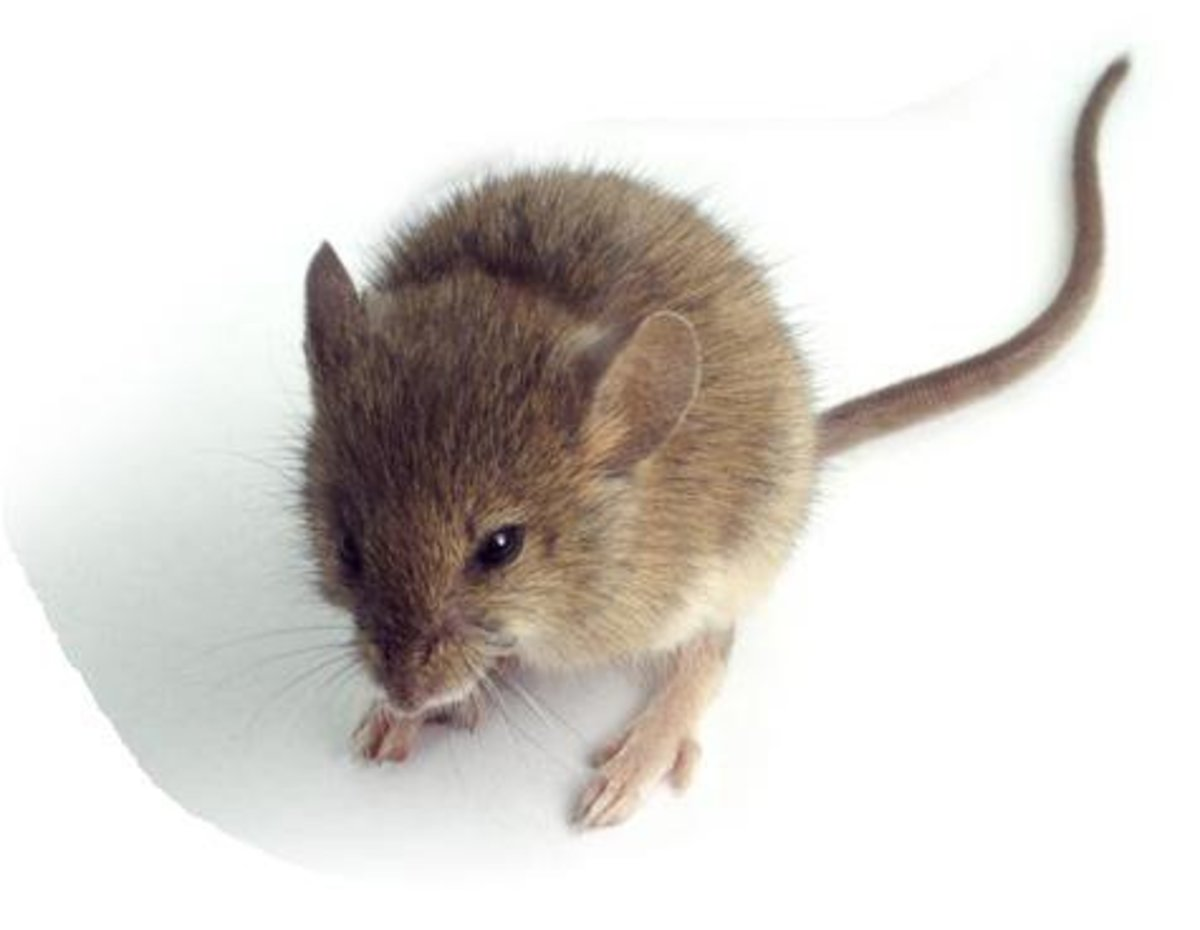 How to Get Rid of the Mice in Your RV (They Are Not Cute Disney Characters!)