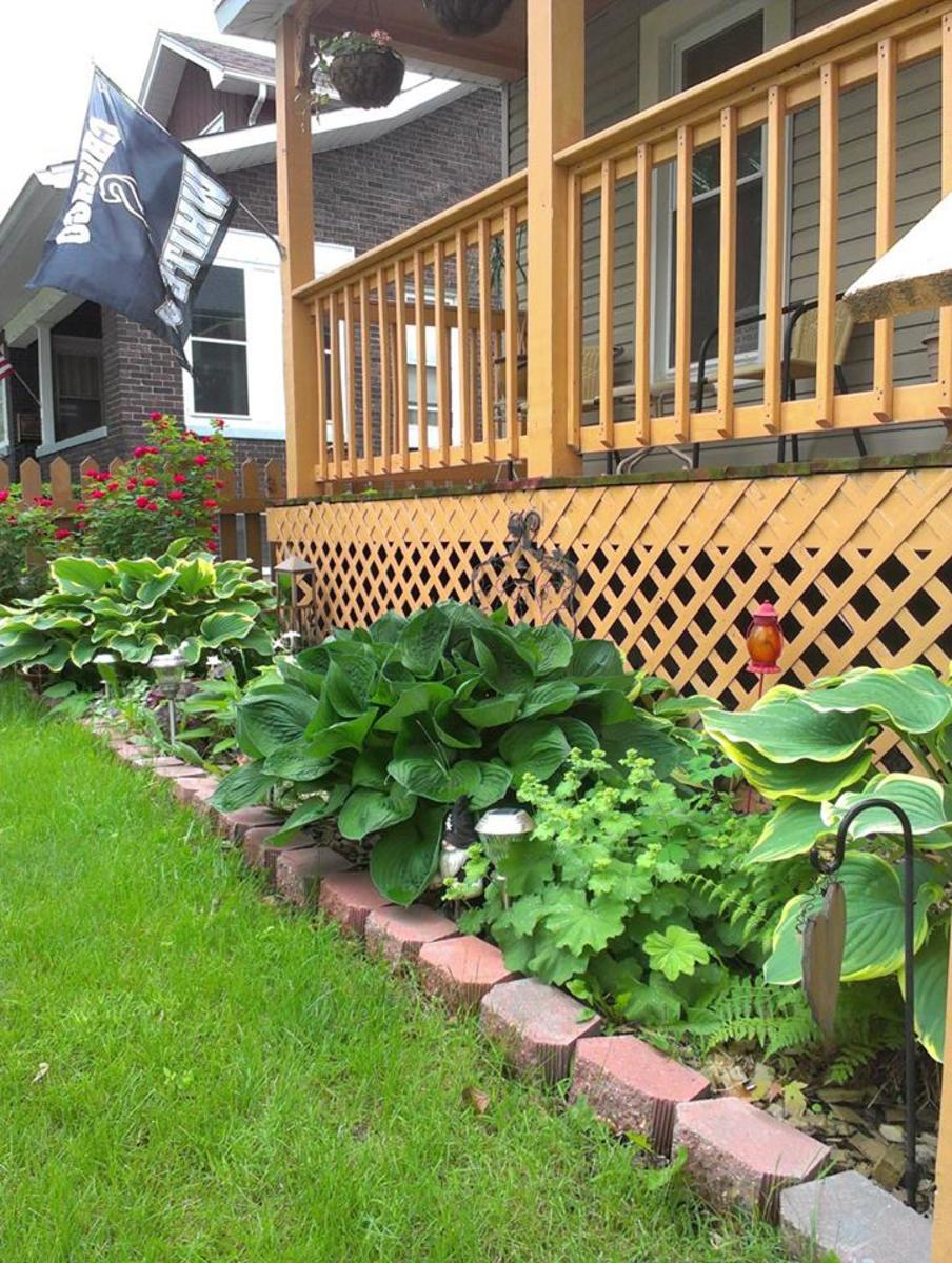 Lady's mantle in the front border with hostas and ferns.