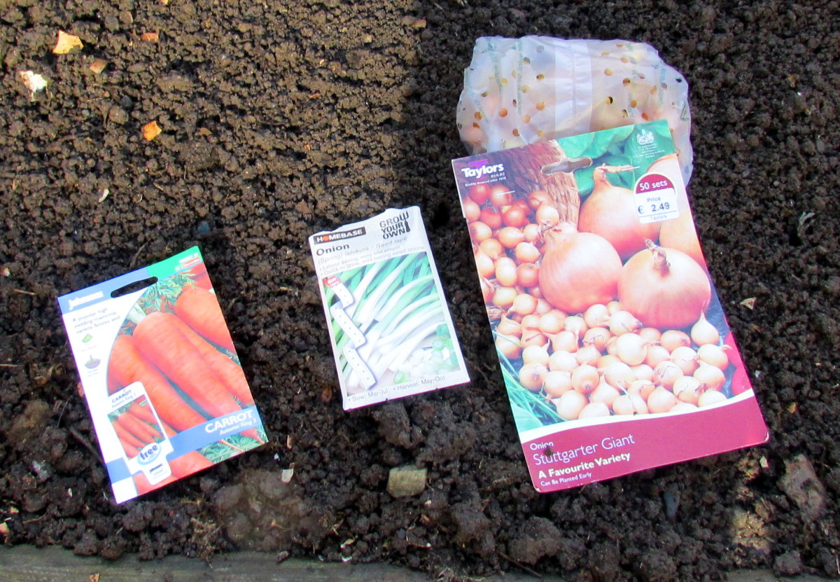 How to grow scallions and spring onions from seeds