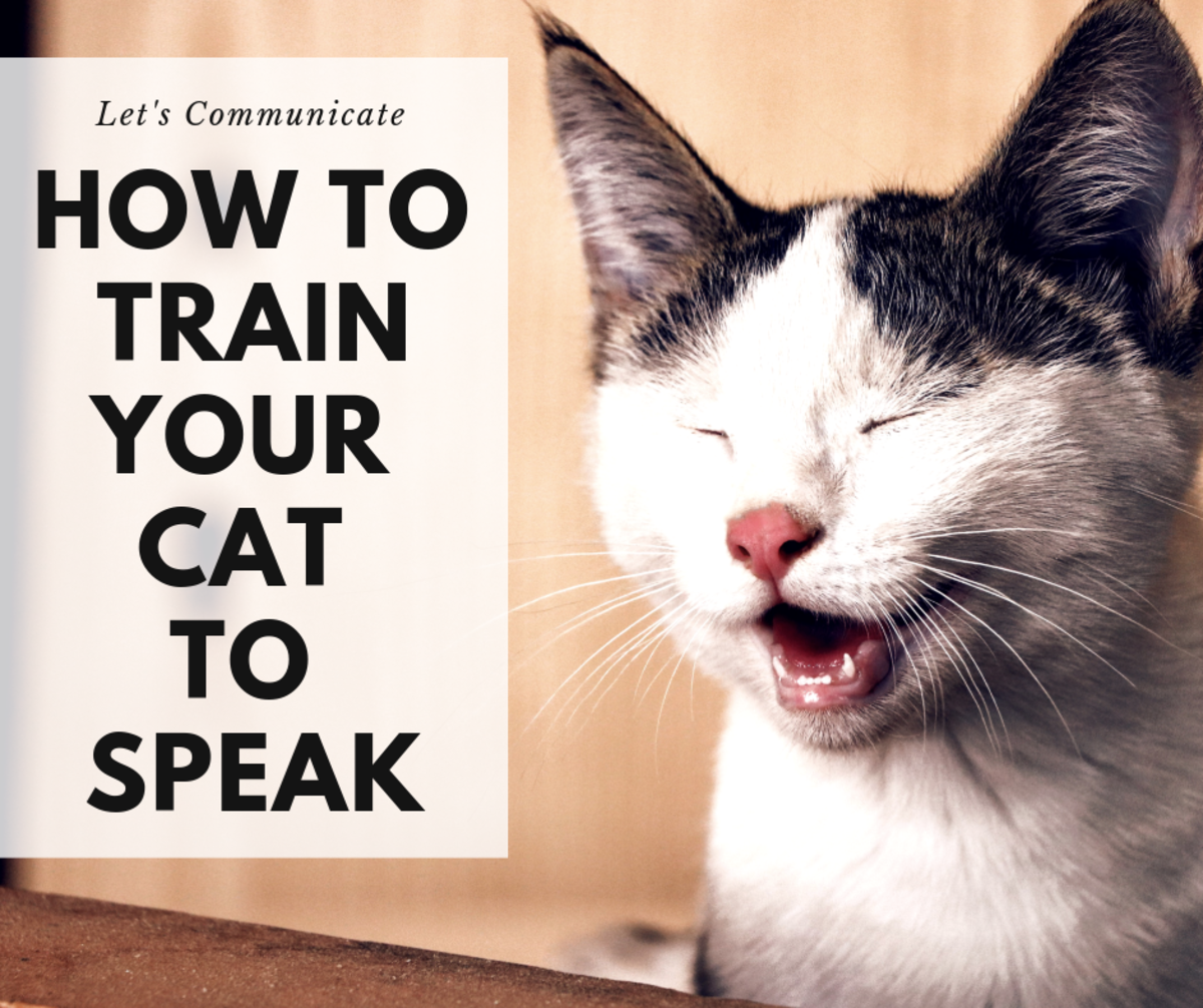 Cat Training: How to Teach Your Cat to Talk