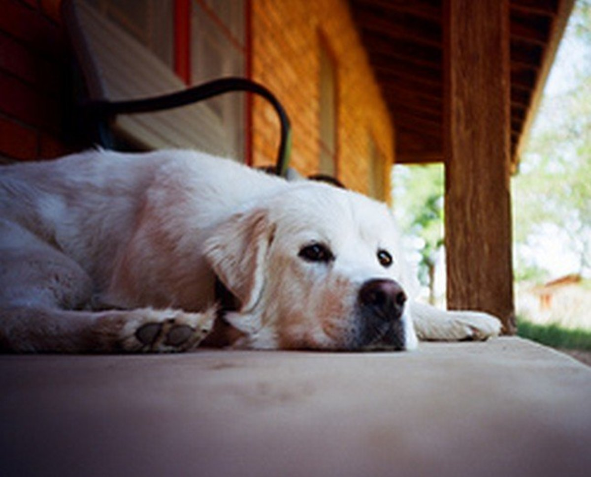 Understanding Dog Pain During Euthanasia