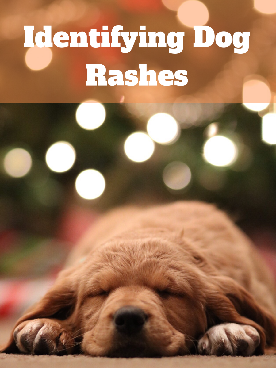 Rashes can be painful and irritating for puppies.