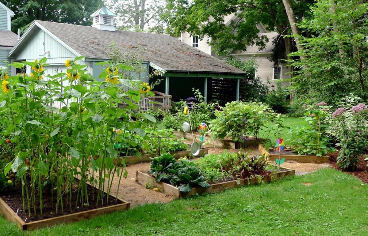 A beautiful, green garden space.