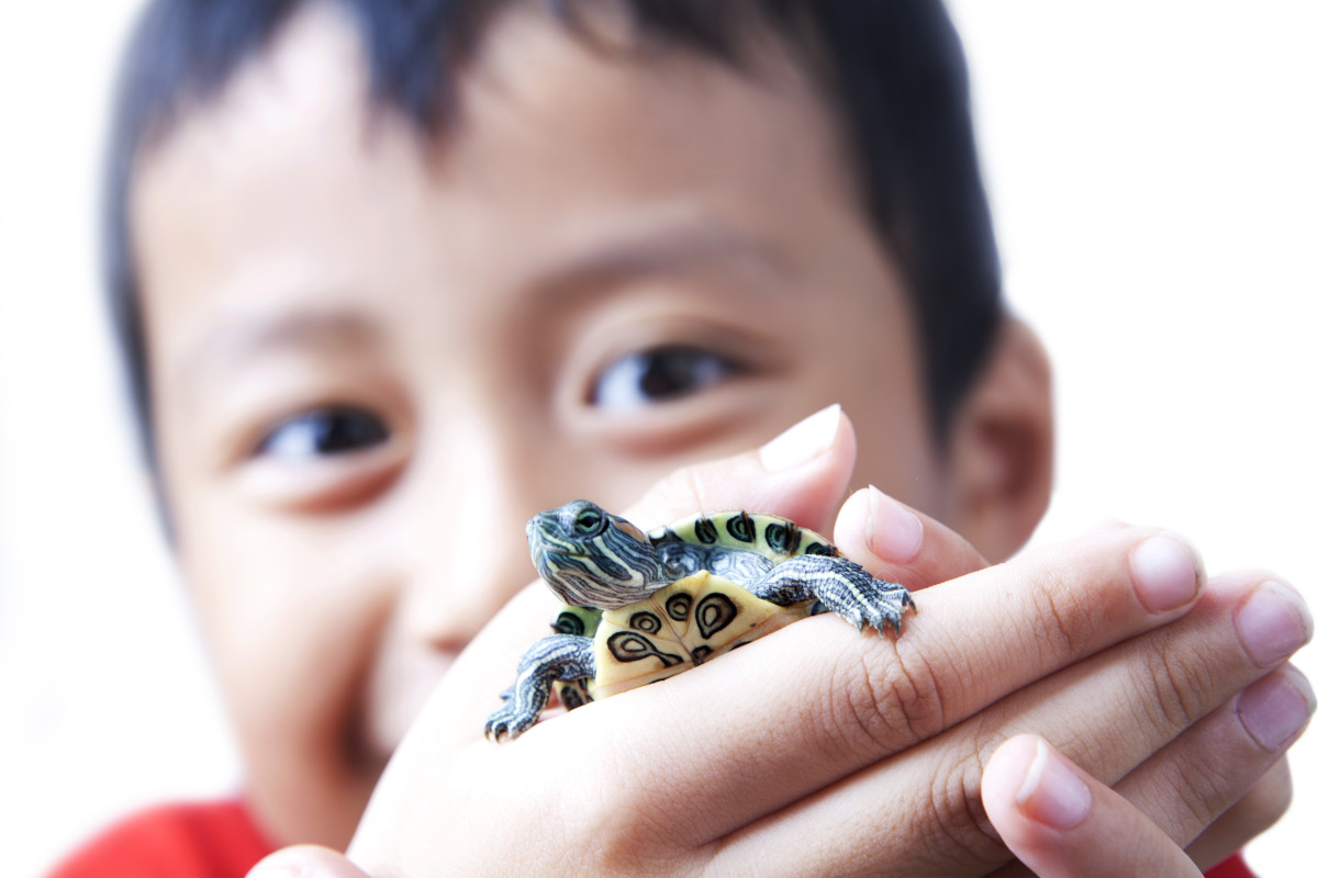 40 Awesome Pet Turtle Names