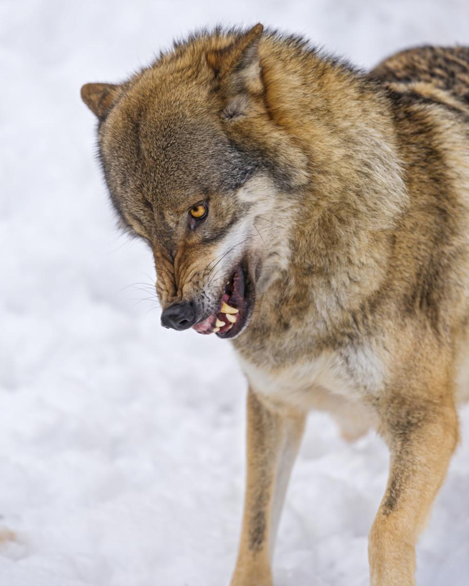 Top 10 Most Dangerous Legal Exotic Pets | PetHelpful