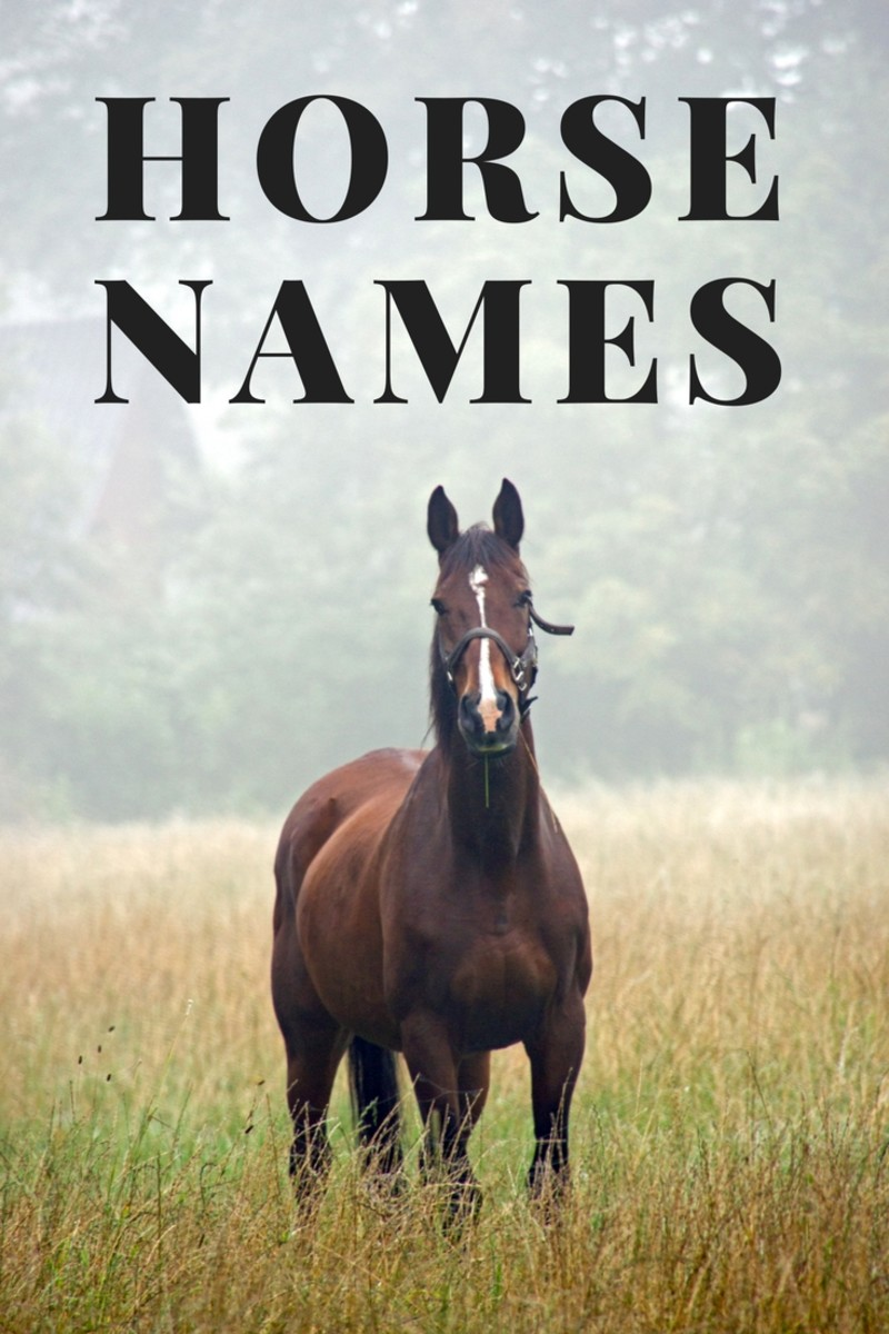 250+ Awesome Horse & Racehorse Names
