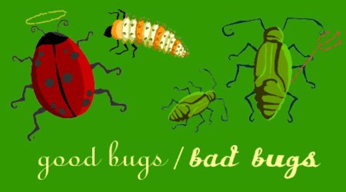 Good Bugs vs Bad Bugs in Your Garden