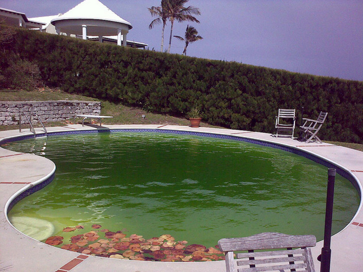 My Swimming Pool Is Green How To Clean Pool Shock Pool Get Rid Of Algae