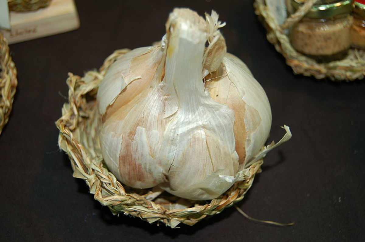 Elephant garlic is a type of leek.  It only half a dozen cloves or less.