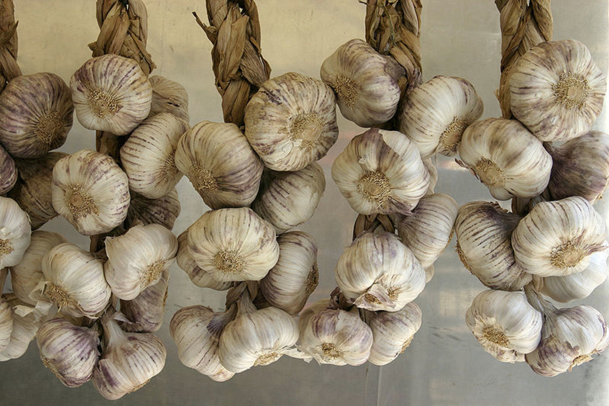 Soft neck garlic foliage is often braided so that the bulbs can be hung in storage which saves space.