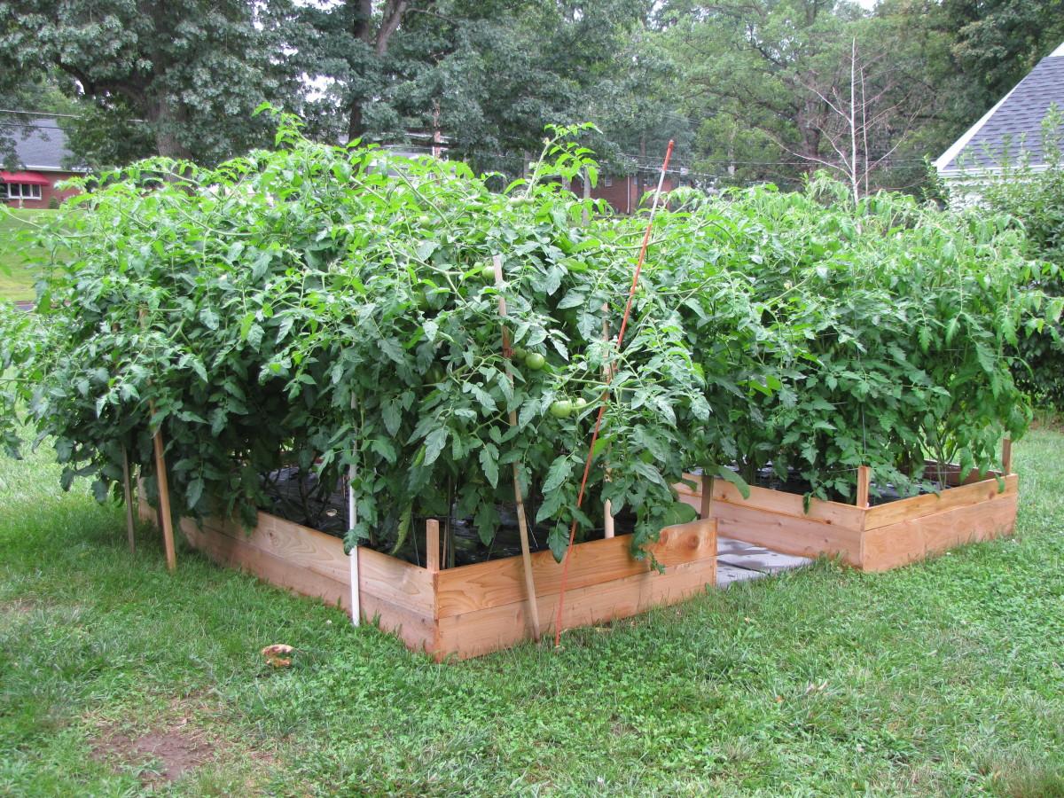 how-to-build-a-cedar-raised-garden-bed