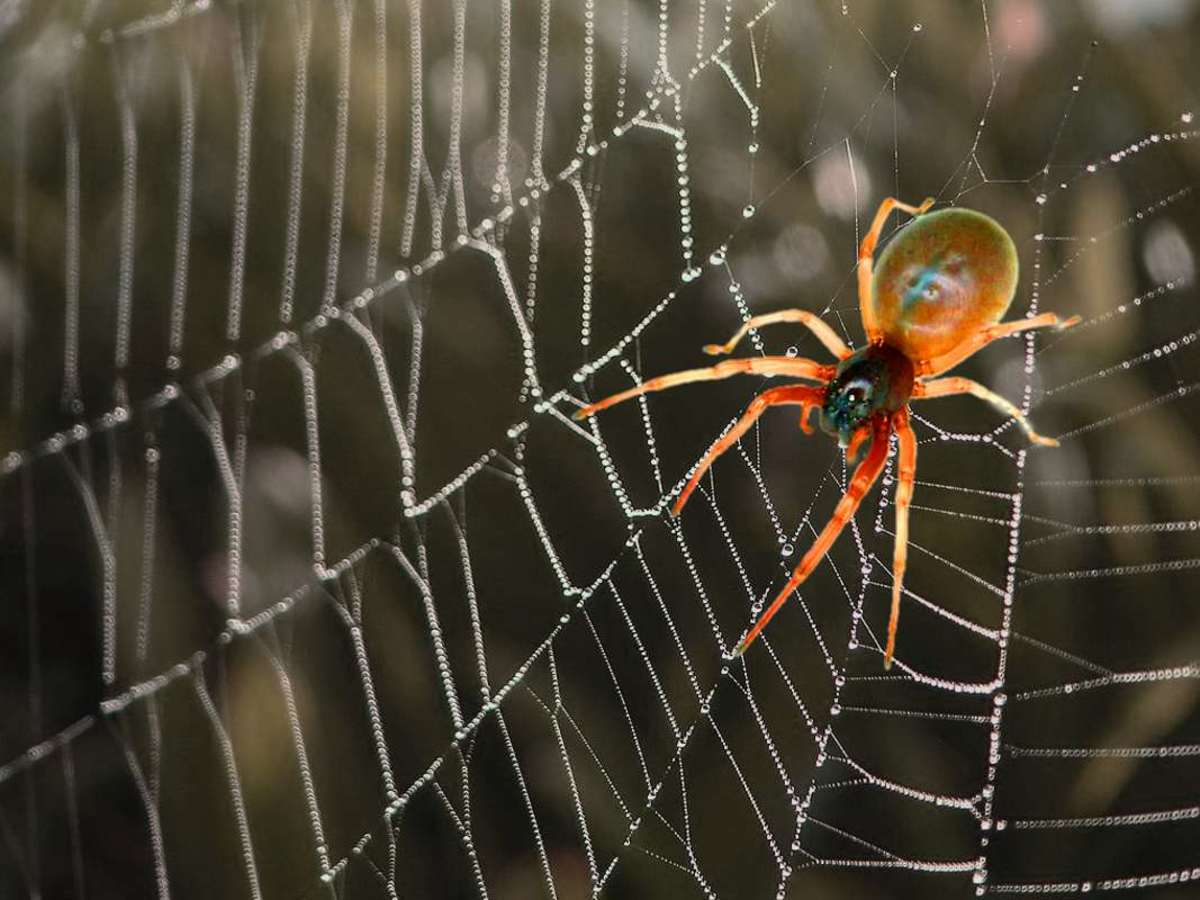 How Spiders Breathe