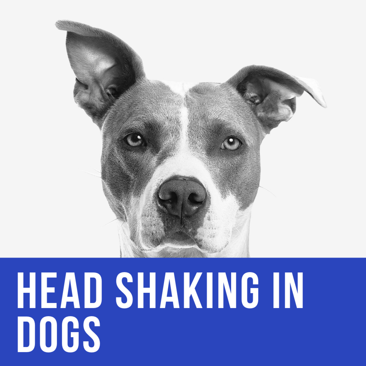 Is your dog shaking its head?