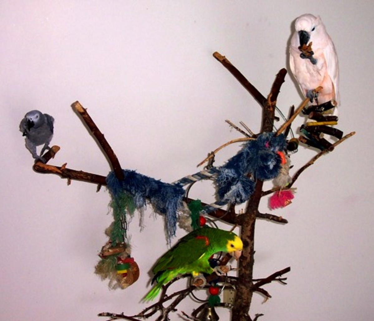 Muggles, Beaker, and Dino on their tree perch.