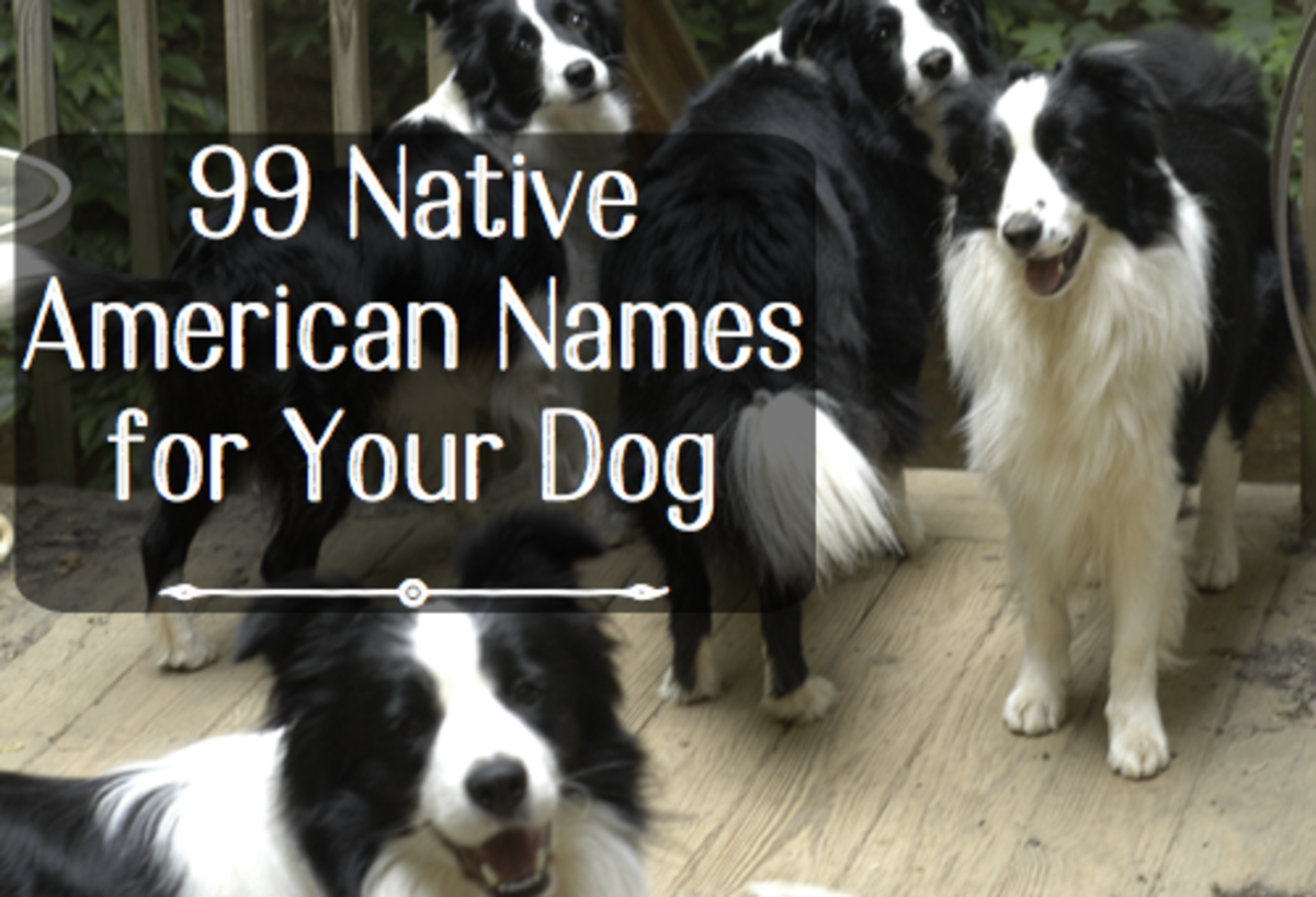 99 Native American Names for Male or Female Dogs