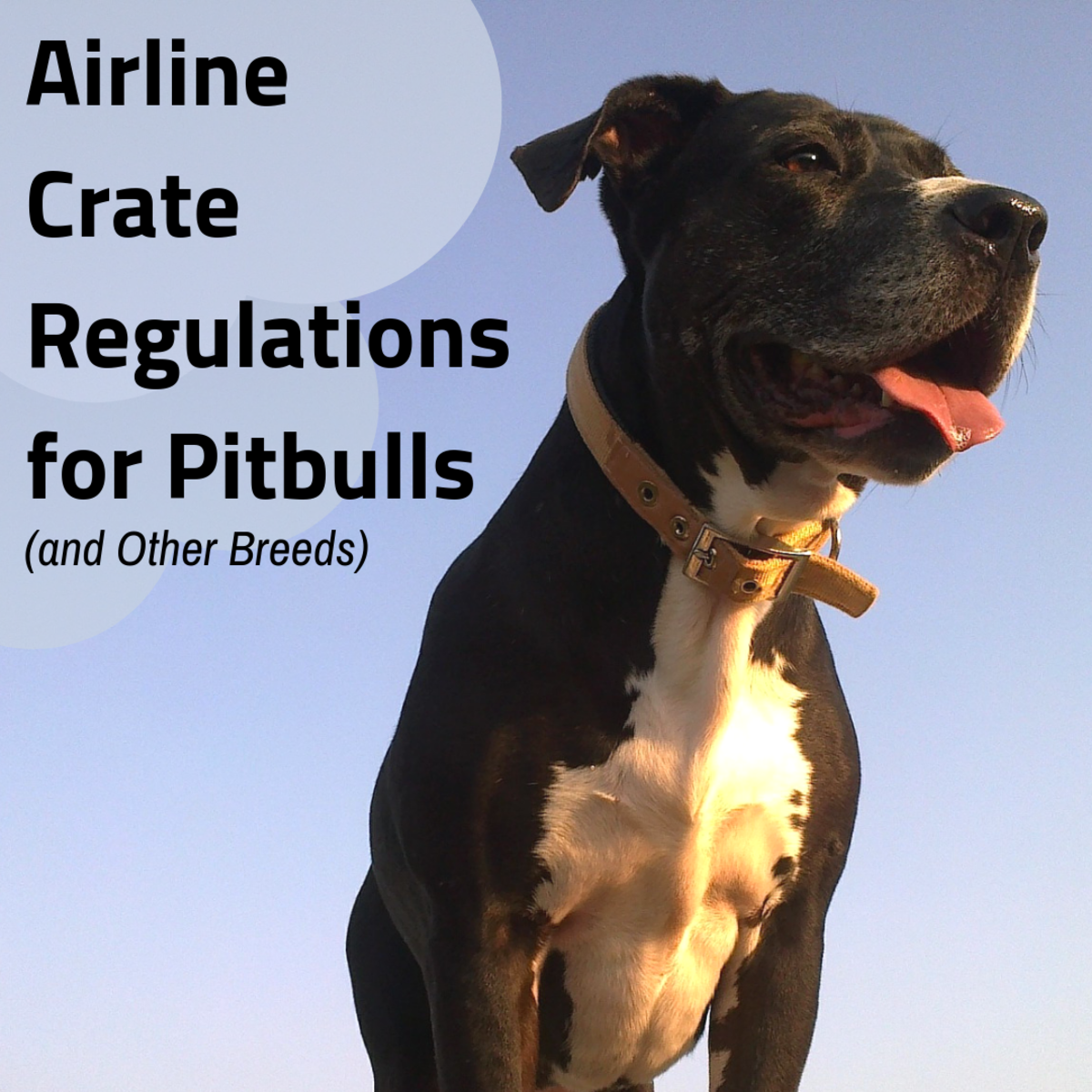 Flying With Your Pitbull? Review the IATA CR 82 Crate Requirements